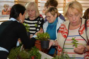 Seniorki podczas warsztatów ogrodniczych oglądają zioła w doniczkach
